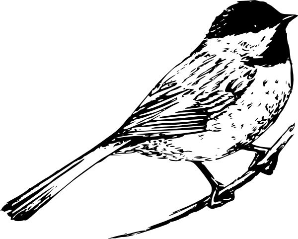 Robin clipart black and white. Pictures of birds bird