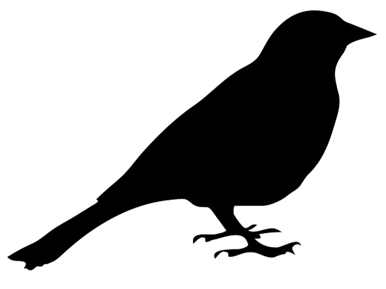 black bird png