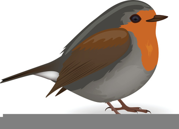 Robin clipart small bird. Redbreast free images at