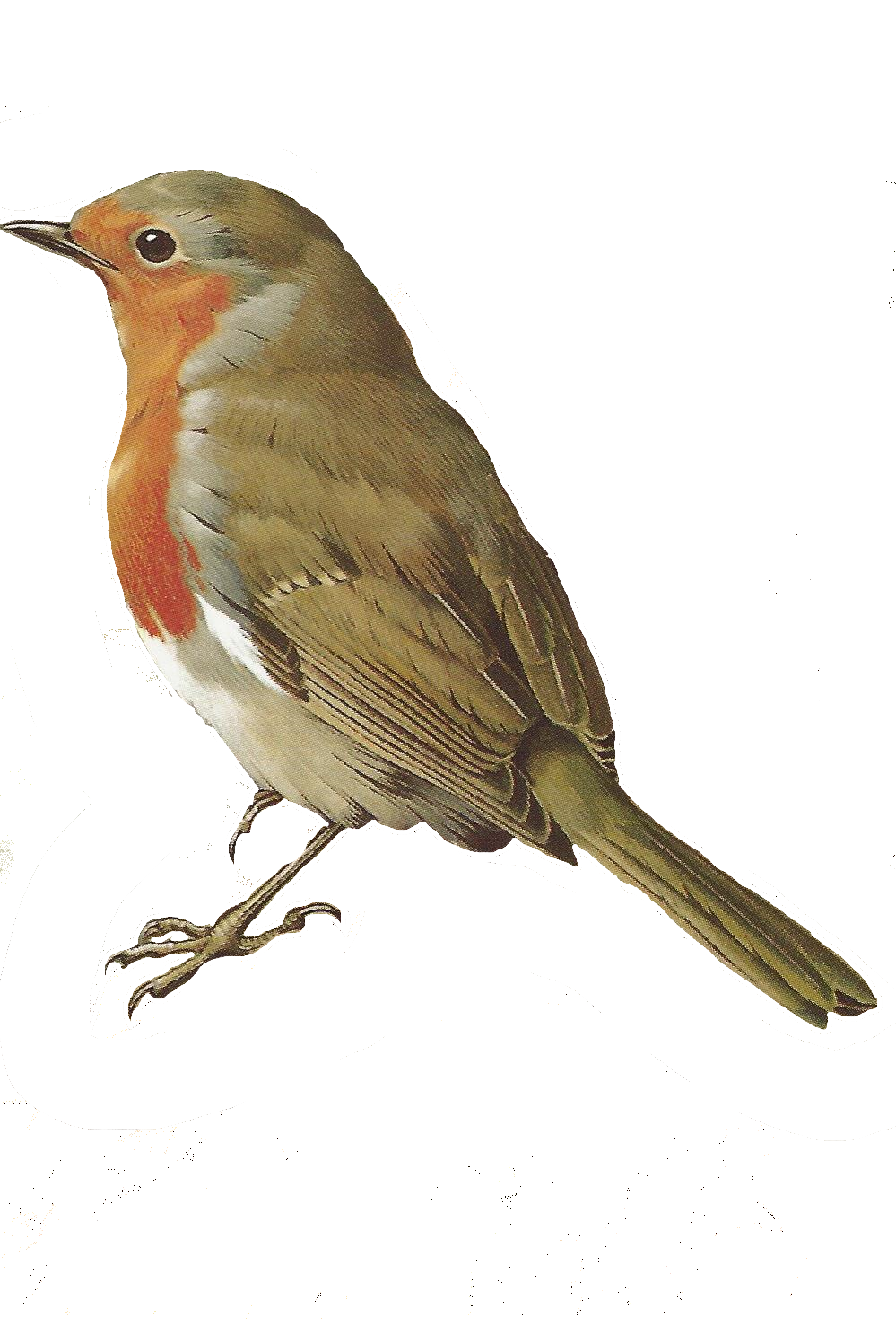 Robin clipart wildlife british. Free images of birds