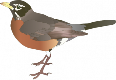 Robin vector animated. American encode clipart to