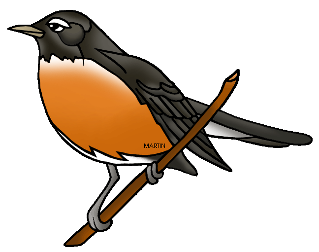 robin vector bird