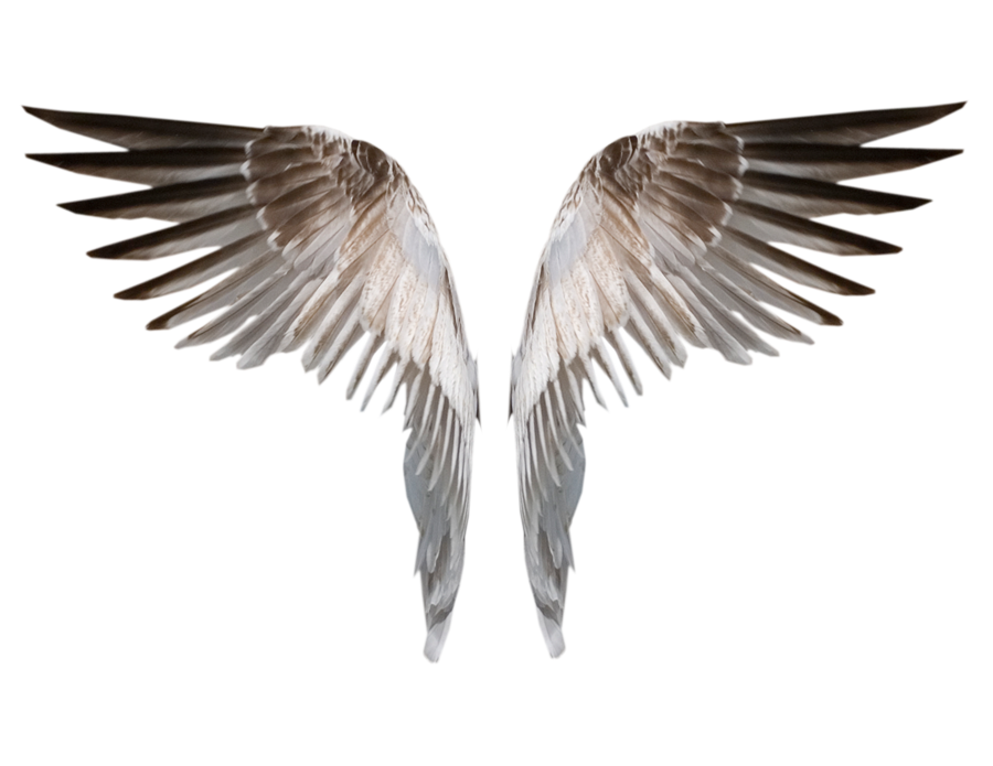 Robot wings png. By evelivesey deviantart com