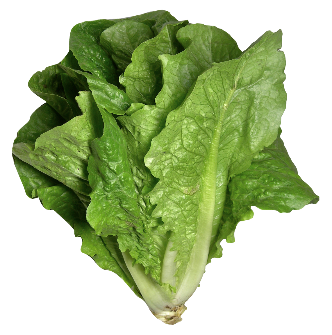 Romaine lettuce png. Image purepng free transparent