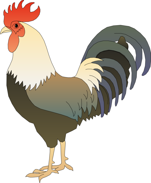 Stock drawing cartoon. Chicken rooster can photo