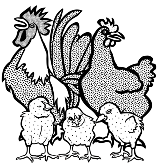 Rooster clipart buff. Cochin chicken poultry as