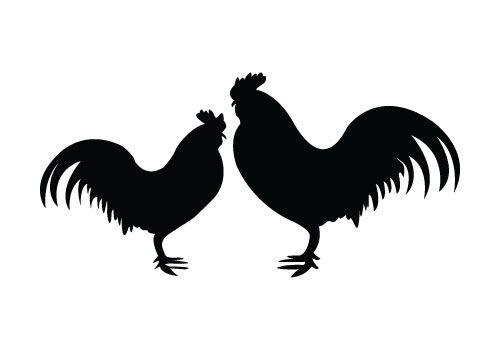 Rooster clipart face. Two roosters standing to