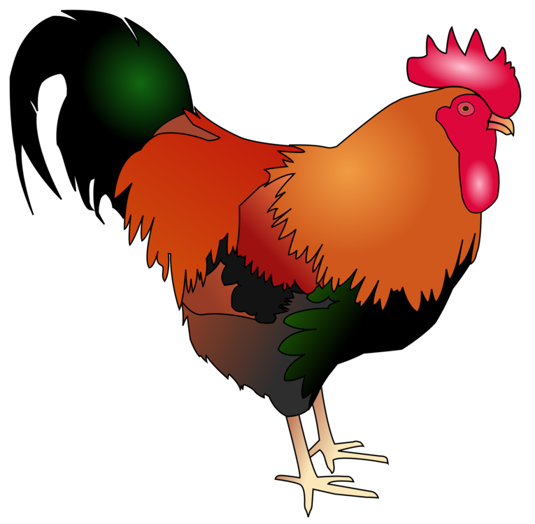 Rooster clipart red chicken. Welsummer cochin poultry livestock