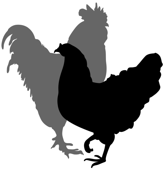 transparent rooster silhouette