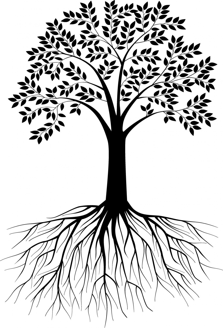 Roots clipart detailed tree. With drawing at getdrawings