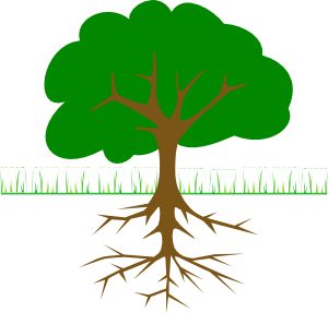 Roots clipart detailed tree. Branches and clip art