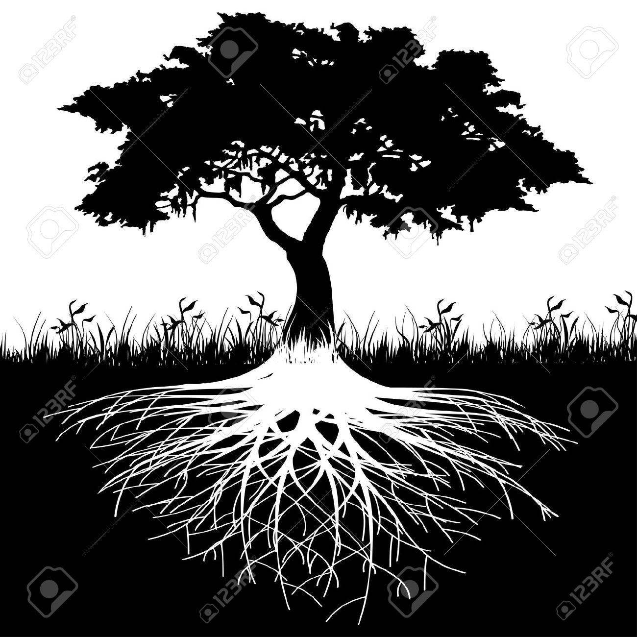 Roots clipart detailed tree. Of life with trees