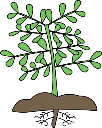 Roots clipart kid. Cartoon plant cliparting clip