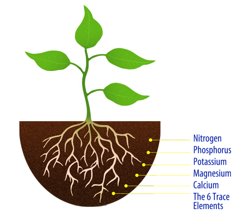 Plant with roots png. Fertilizers explained macronutrients micronutrients
