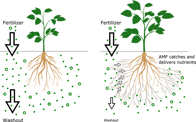 Roots clipart plant nutrient. Evologic grow different this