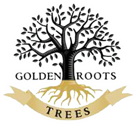 Roots clipart root texas. Golden trees wholesale tree
