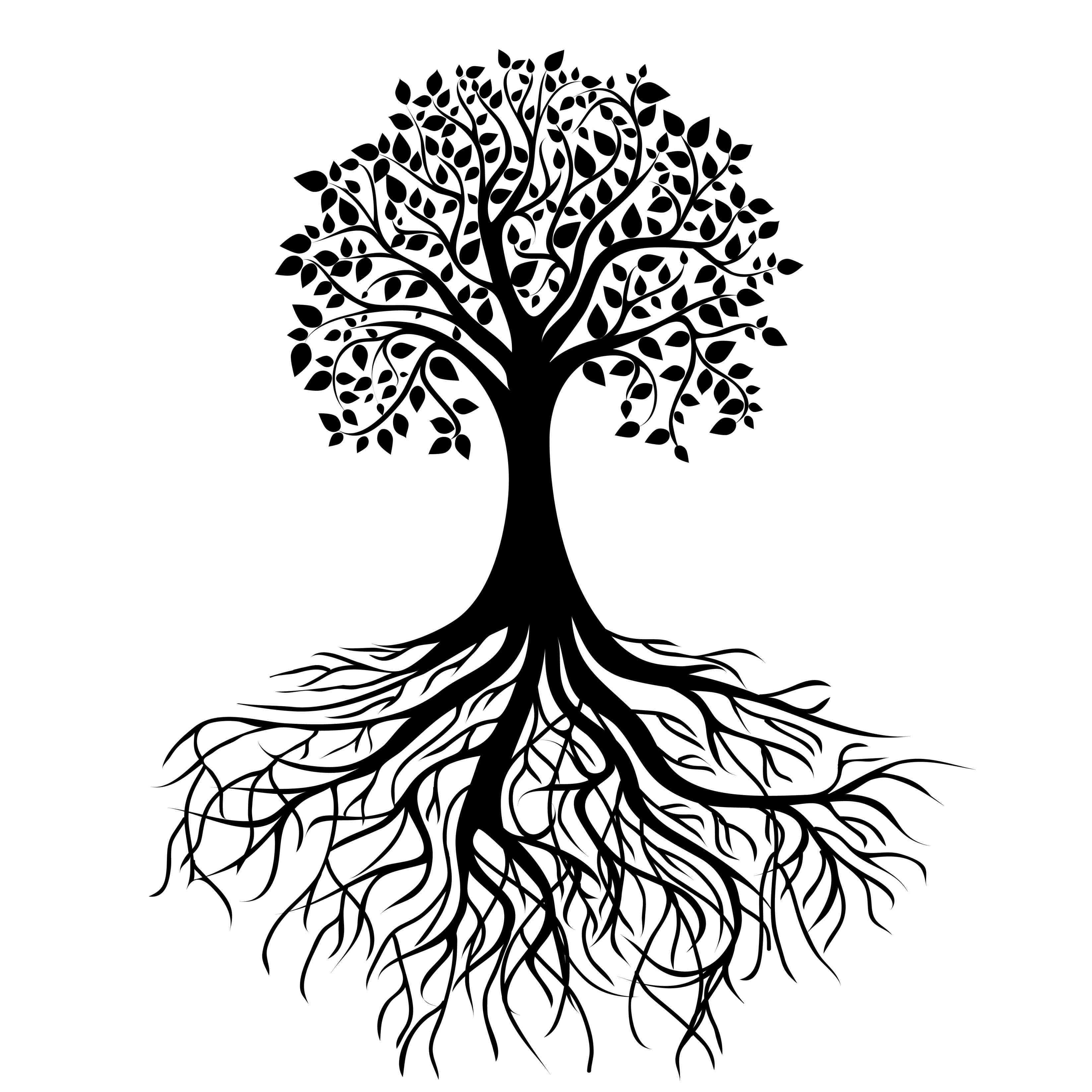 Roots clipart rooted tree. Image result for black