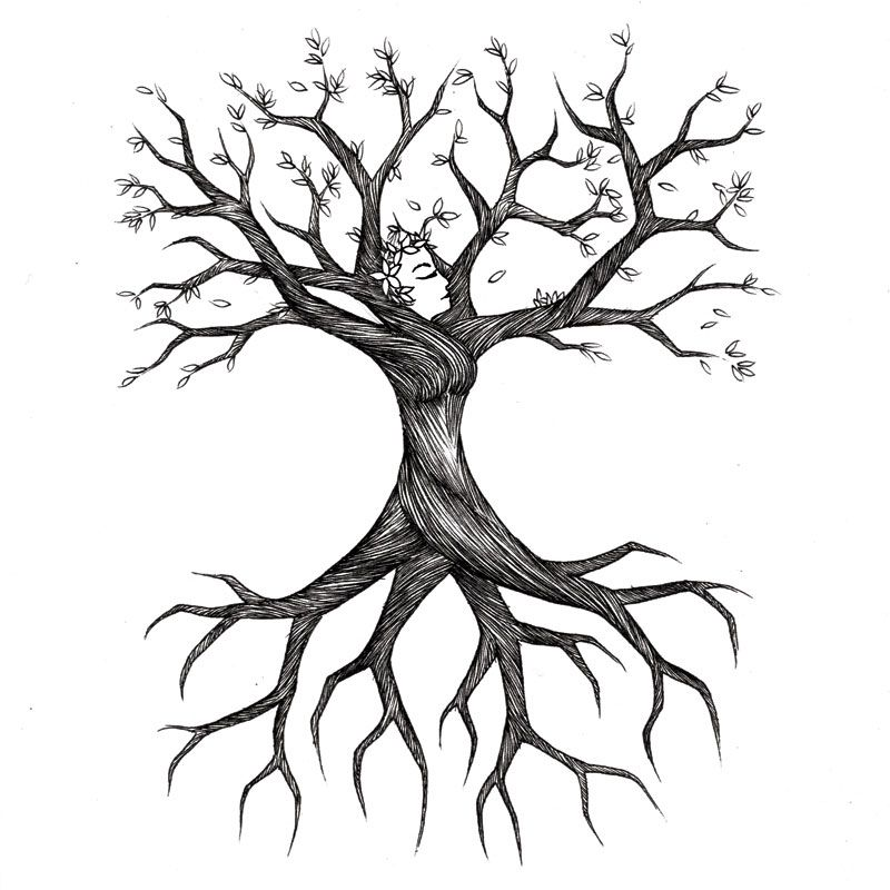 Tree sketch treesa s. Roots clipart wit clip stock