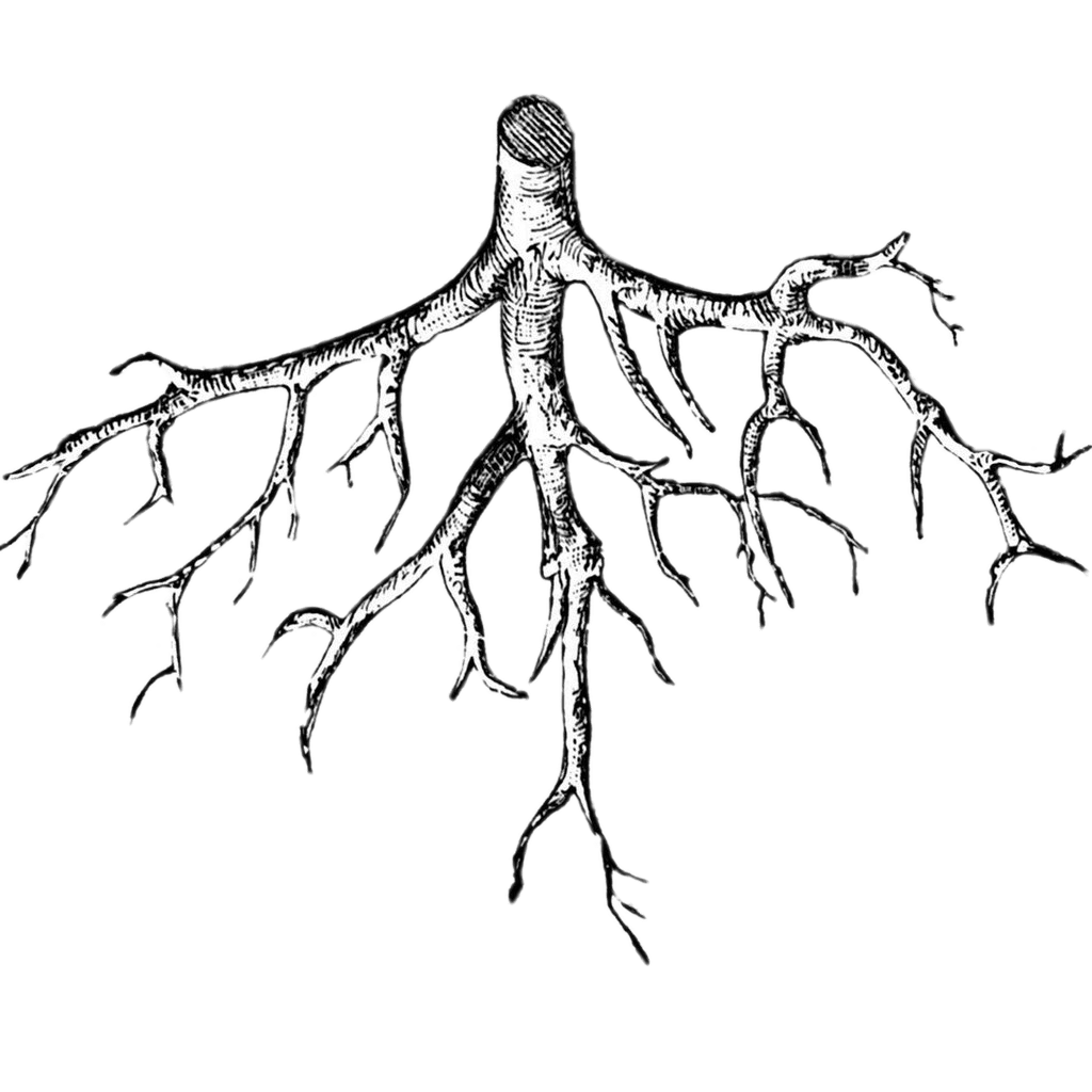 Illustration transparent stickpng download. Roots png graphic free