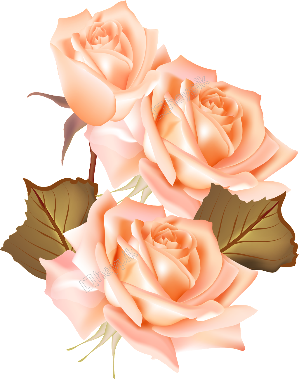 Vectores rosas png. Champ n rosa y