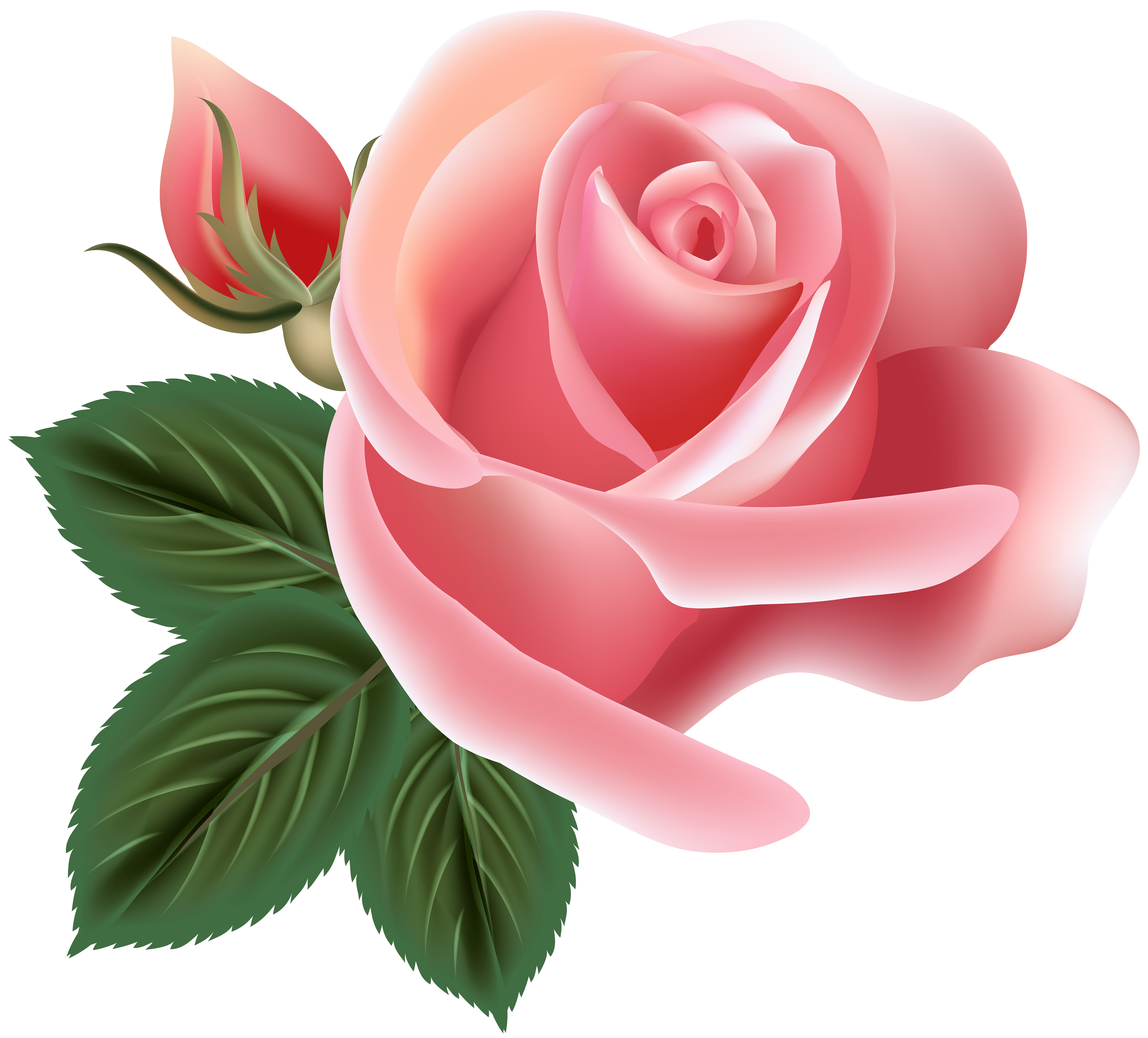 Rose art png. Pink clip image gallery