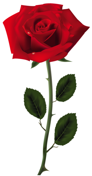 Red rose png. Art picture clipart pinterest
