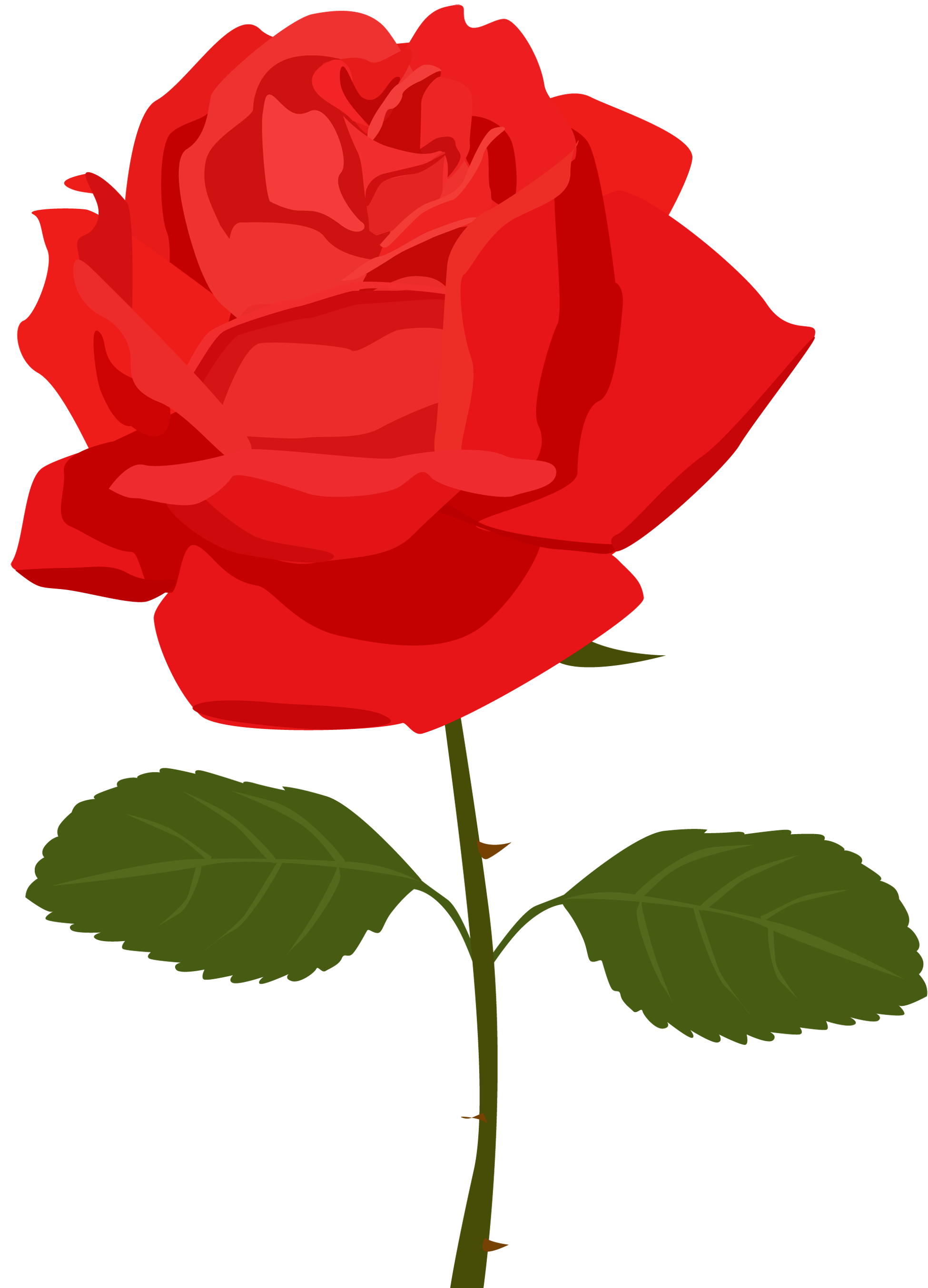 Cartoon rose png. Transparent red picture gallery