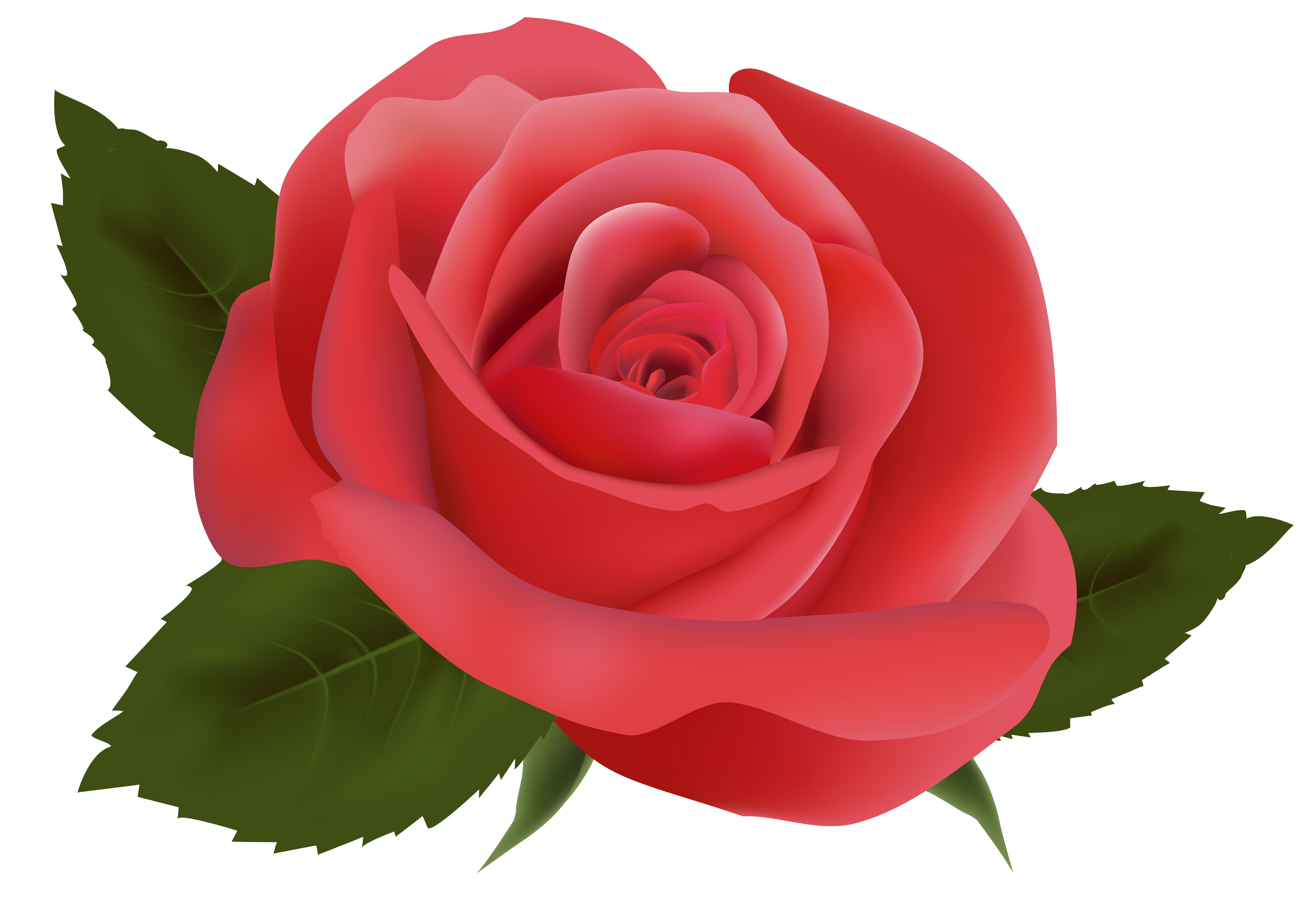 Roses clipart png. Red rose image gallery