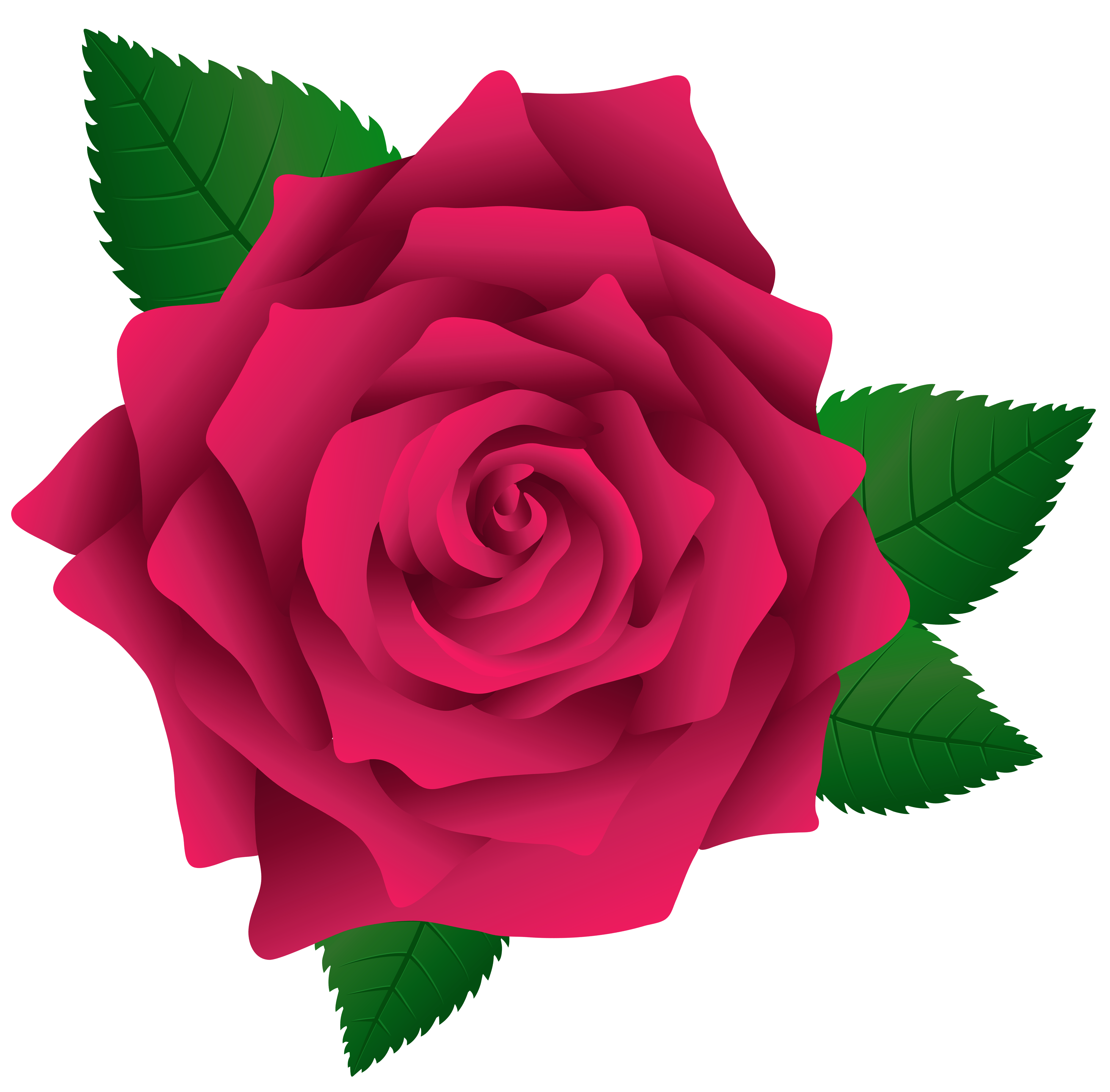 Roses clipart png. Pink rose image gallery