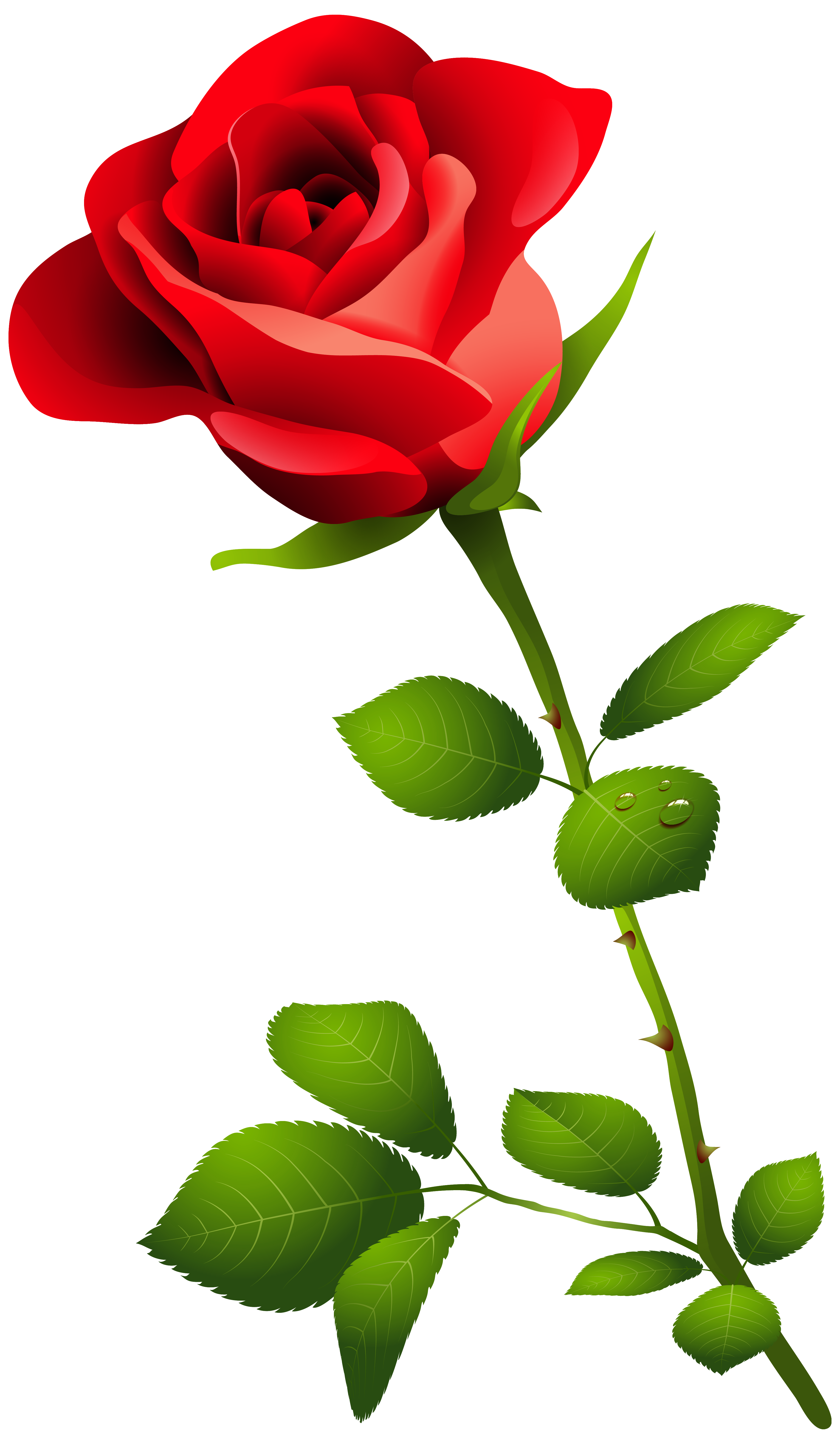 Stem drawing red rose. With png clipart image