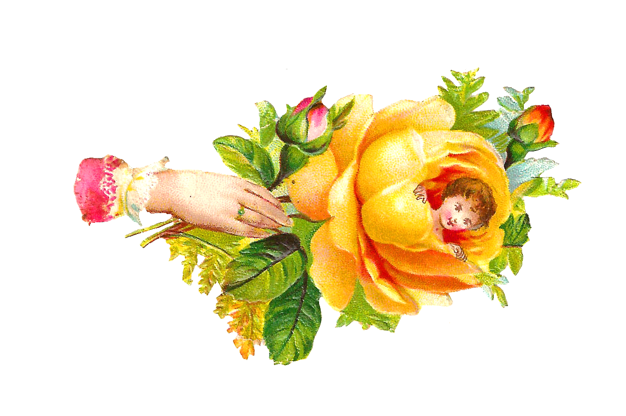 Rose clipart baby. Free roses cliparts download