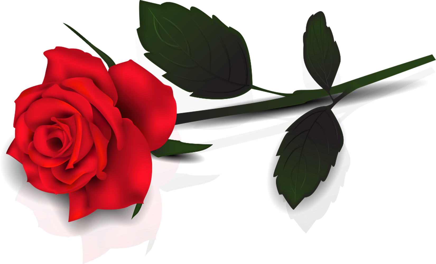 Rose clipart clear background. Free transparent cliparts download