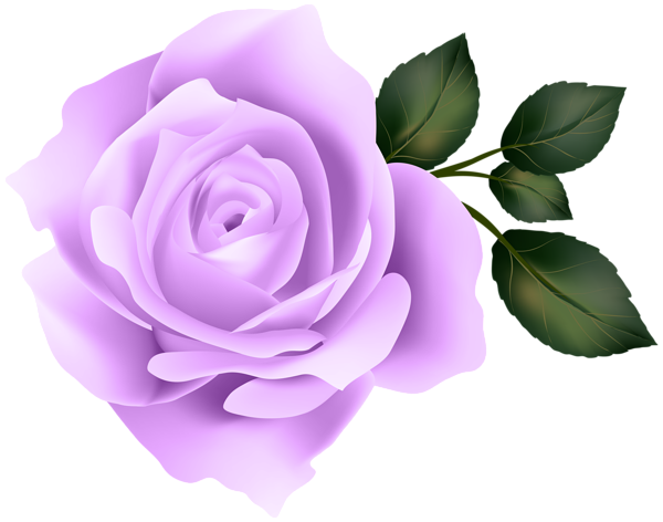 Rose clipart clear background. Purple clip art image