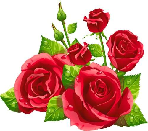 Rose clipart clear background. Free psd gentle roses
