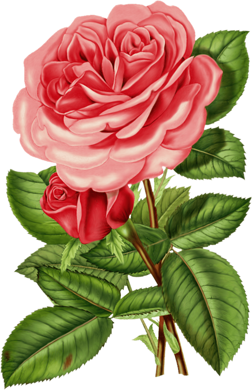 Rose clipart pink rose. Victorian