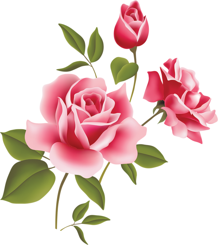 rose clipart pink rose