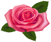 Rose clipart pink rose. Free images beautiful png