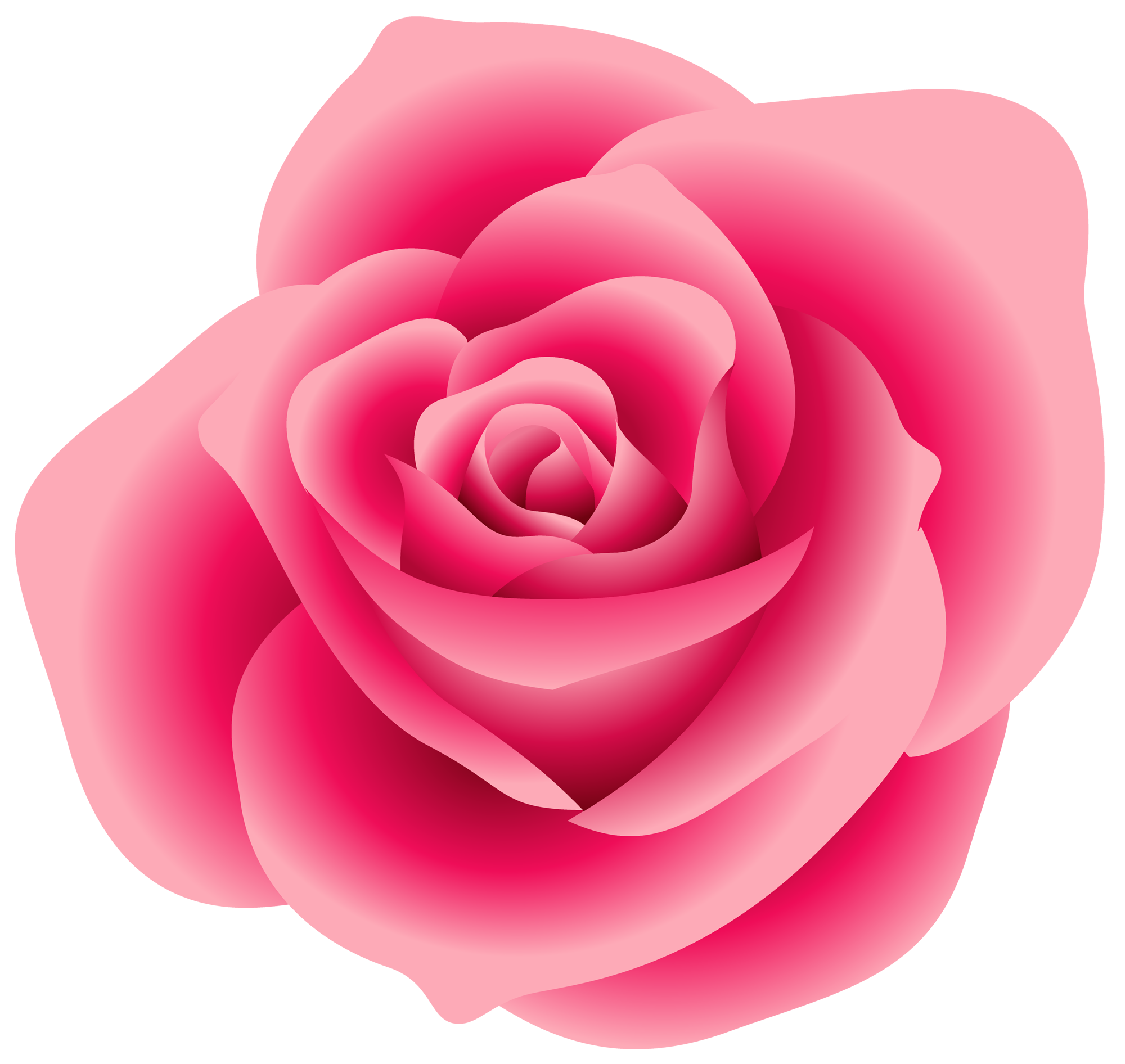 Rose clipart pink rose. Real invitations pinterest roses