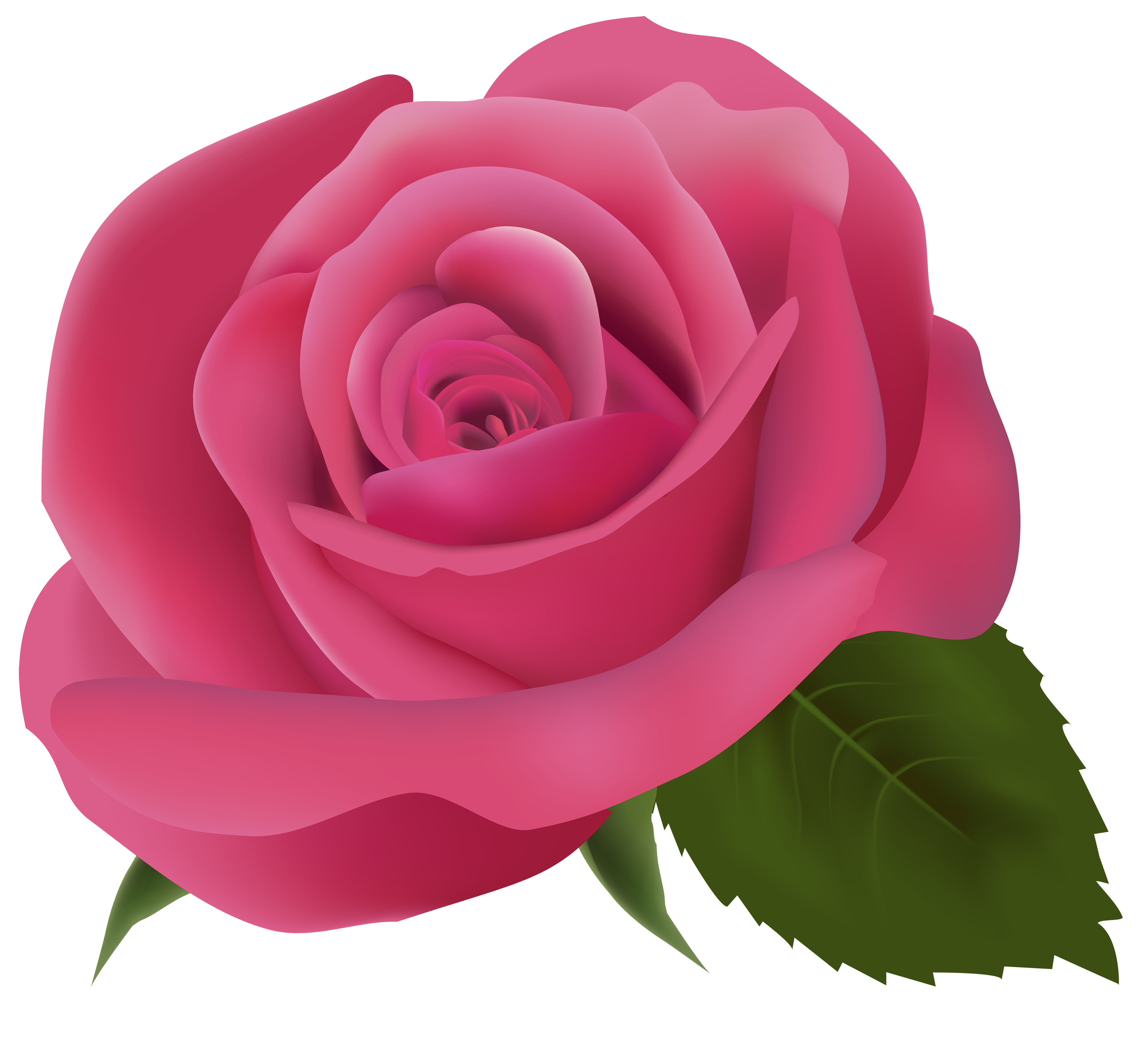 png pink roses