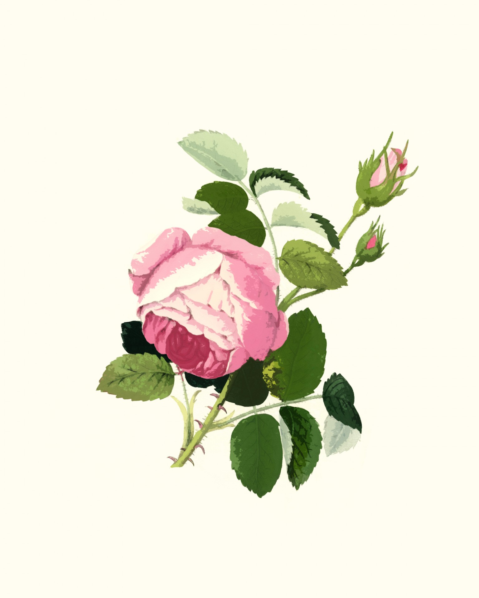 Rose clipart pink rose. Free stock photo public