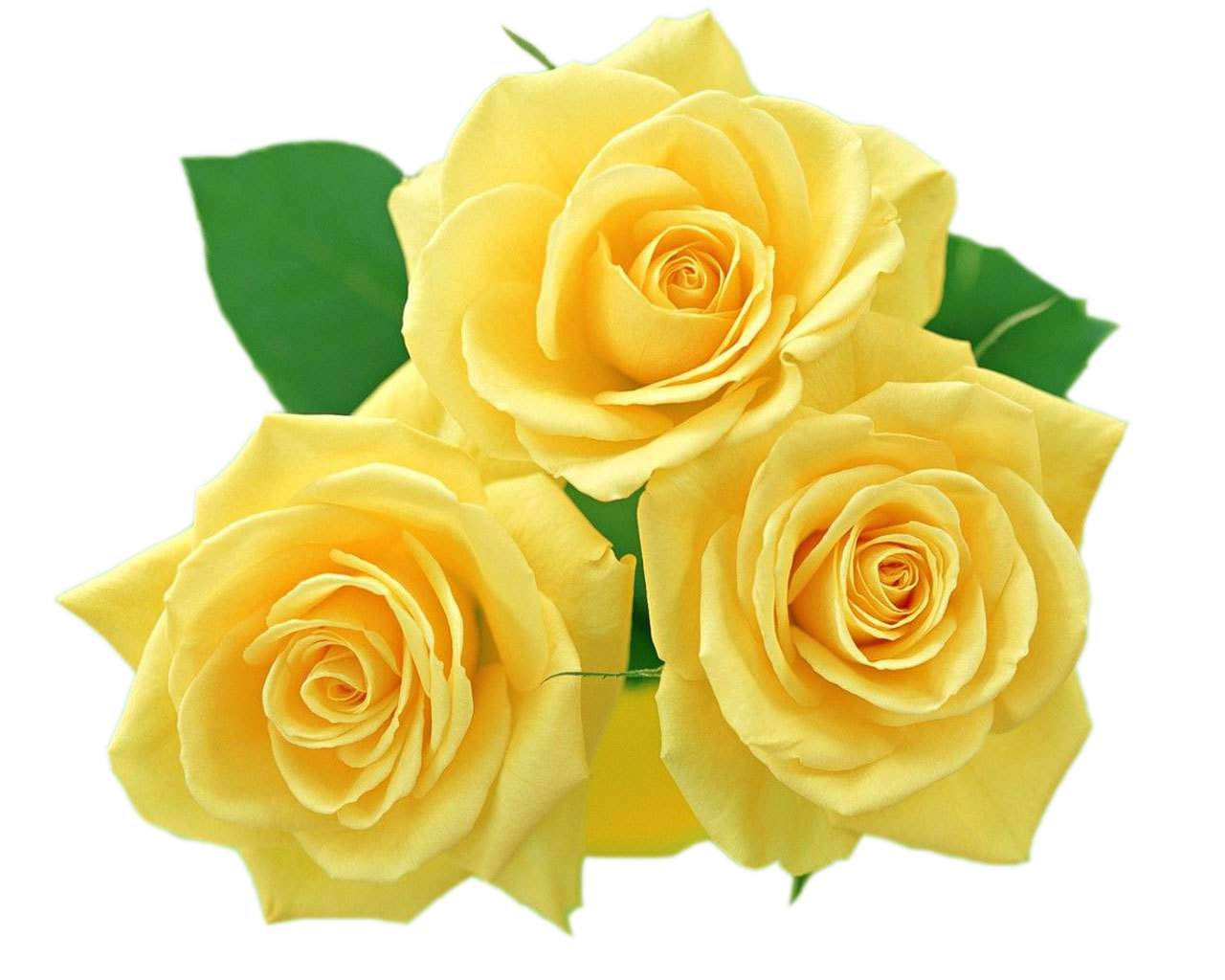 Rose clipart yellow rose. Roses png gallery yopriceville