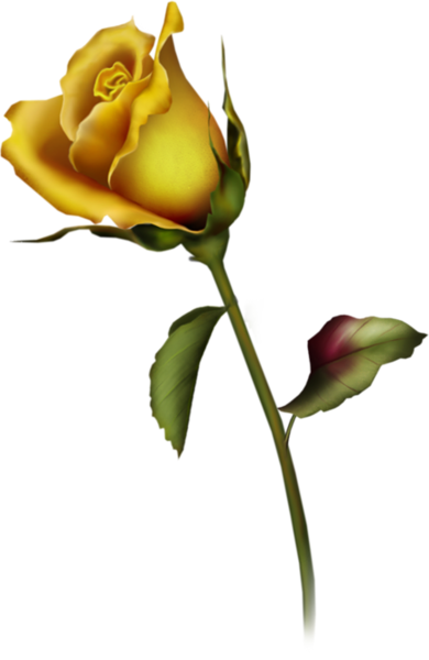 Rose clipart yellow rose. Bud clip art gallery