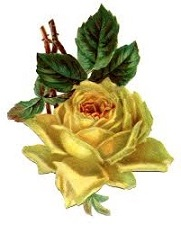 Rose clipart yellow rose. Free vintage