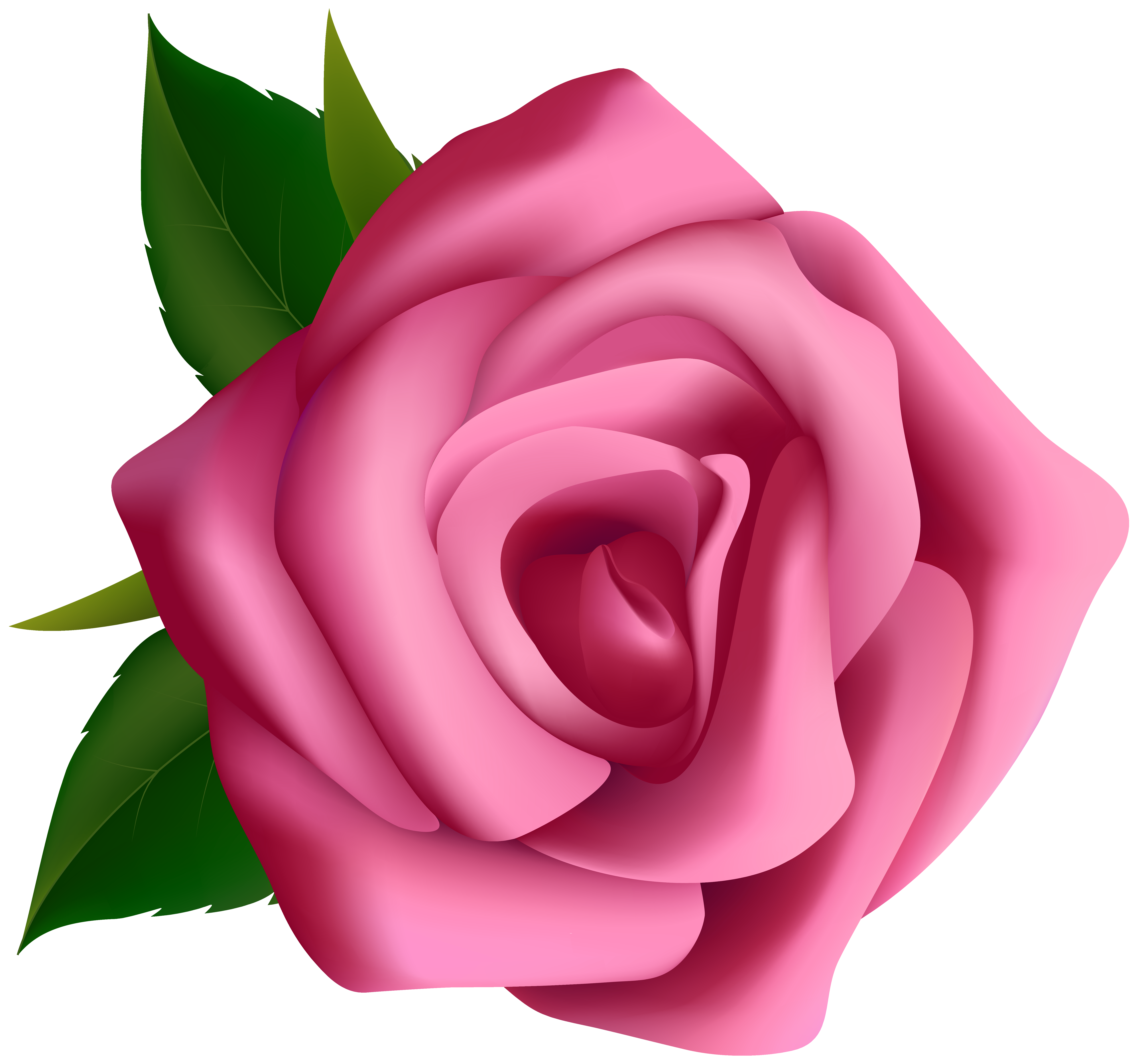 Rose clipart. Pink png image gallery