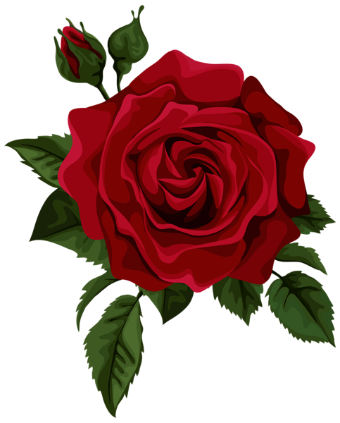 Rosas rojas vector png. Collection of rose