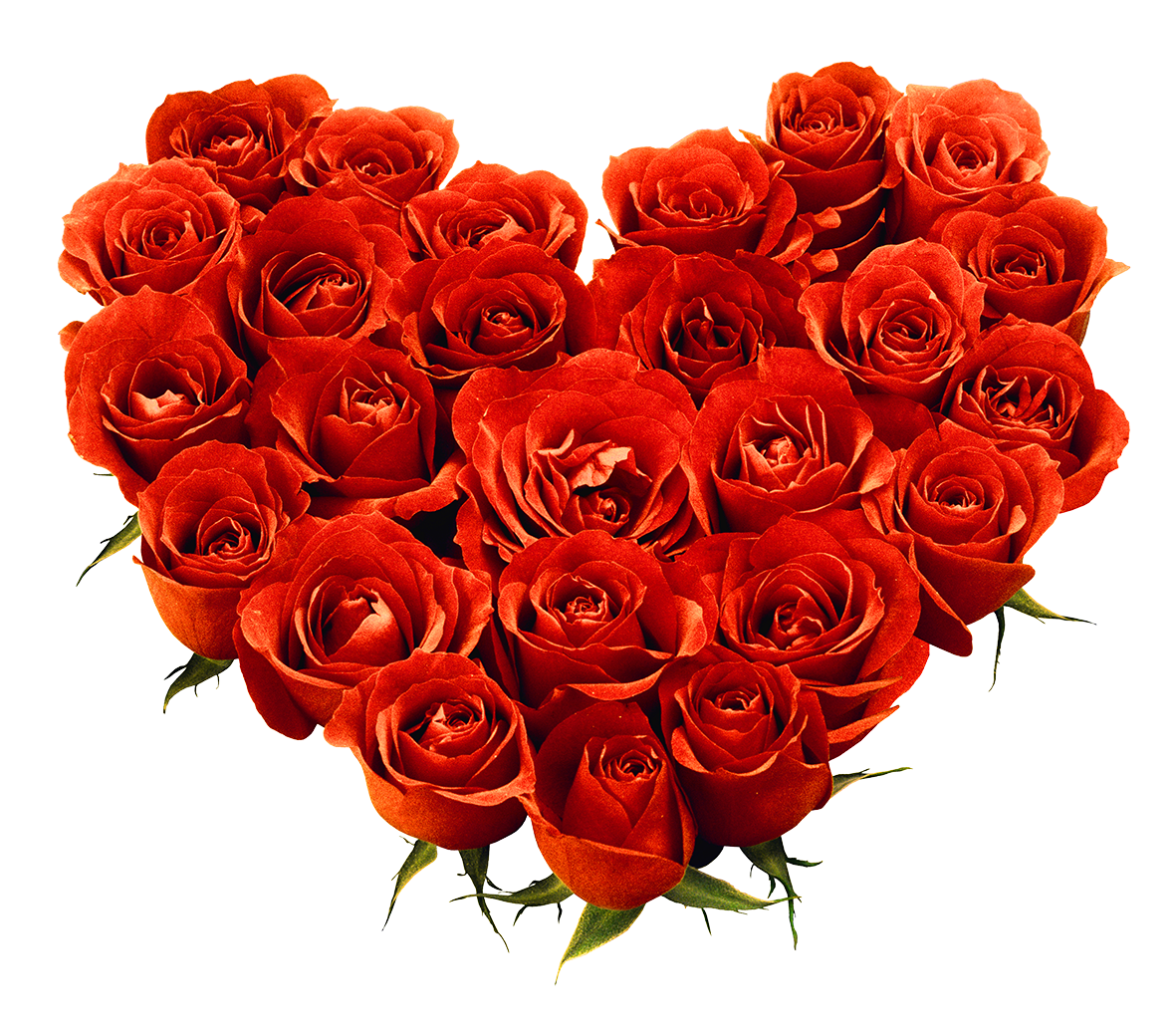 Rose flowers png. Love flower