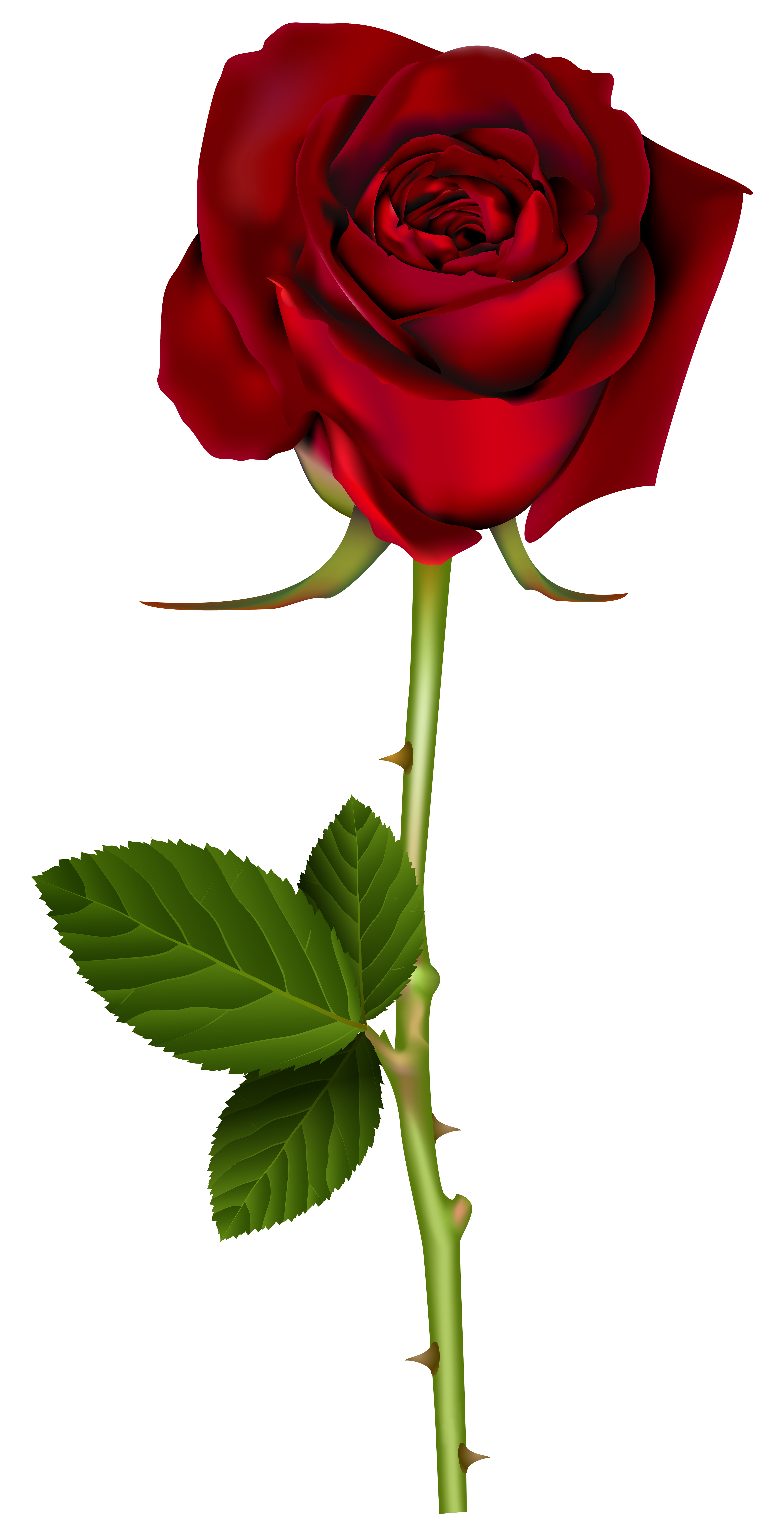 Rose .png png. Clipart flowers pinterest and