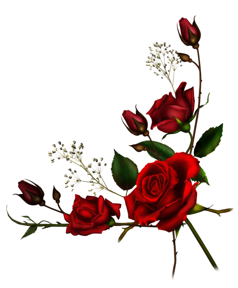 Rose png tumblr. Red flowers rosesfreetoedit