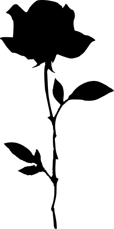 Rose silhouette png. Free images toppng transparent