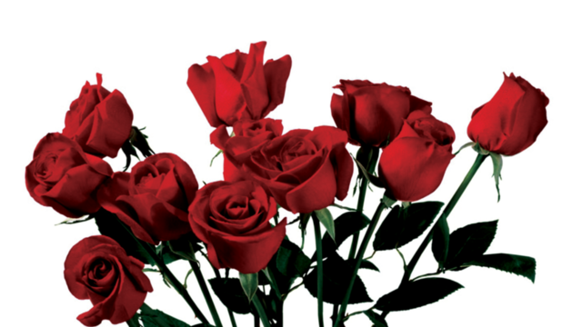 Rose with thorns png. Bed of tumblr a
